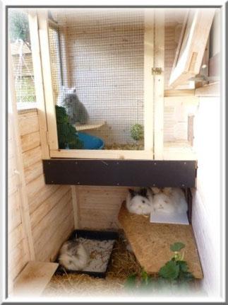 Unser Herde steht nun auch die Möglichkeit zur Verfügung eine zusätzliche Etage im Freisitz zu nutzen. Auch hier ist der Zugang über eine Katzenklappe zugfrei realisiert.