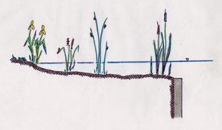 Klärzone mit Einzelbepflanzung