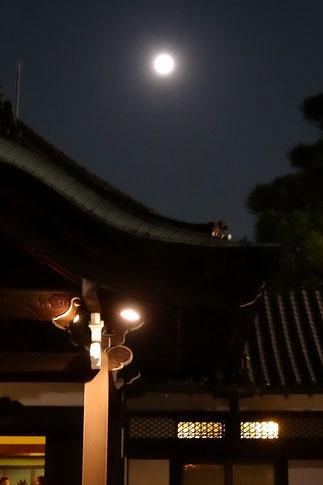 大阪市内の太閤園のお庭から見た満月。ブルームーン。