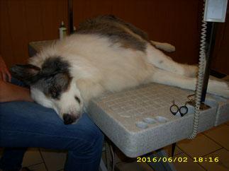 Ob im Liegen oder Stehen, Hundefriseur mach mal!
