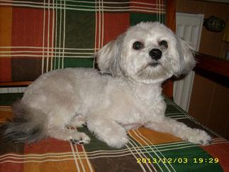 Lilly bekam nach dem Bad einen pflegeleichten Kurzhaarschnitt