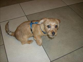 Muffin (3 Monate alt) kam  schon einmal zum Schnuppern