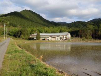 鶏舎の前には田んぼが広がり、豊かな自然に囲まれた丹波の奥座敷に鶏舎があります。