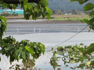 鳥たちも湖面で一休み。間もなく、厳しい冬が訪れます