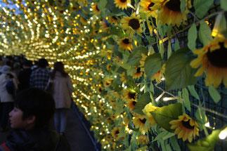 先ずは「花のトンネル」がお出迎え