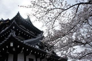 高田城三重櫓。一年でいちばん輝く時