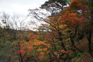 昨日の強風に耐えた木々の紅葉。心はセンチメンタル。