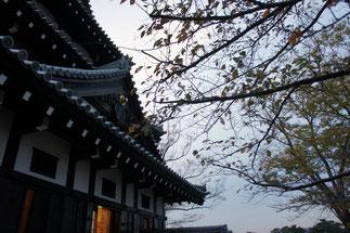 お城と桜のコラボレーション。また来年お会いしましょう