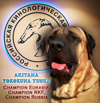 tosa inu,tosa inu puppies,тоса ину питомник,тоса ину щенки,tosa inu kennel