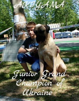 Тоса Ину Акияма Юный Гранд Чемпион Украины