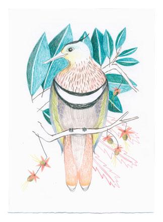 Heike Herold, Zeichnung, Vogel, Buntstiftzeichnung, Bunststift