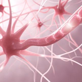 Raum und Nervensystem, Raumwahrnehmung