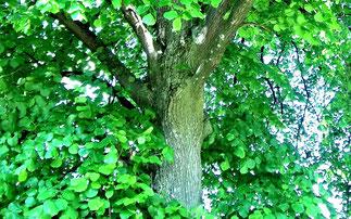 Une arbre