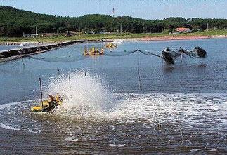 Garnelenzuchtbecken mit Dauerbelüfter. Foto: Wikipedia