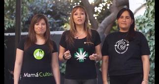 mama cultiva grupo de madres chilenas reclama derecho a cultivar marihuana