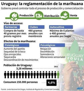 autocultivo uruguay, regulacion marihuana, marihuana uruguay, noticias marihuana