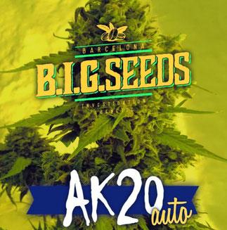 semillas marihuana ak 20 auto alerta kamarada