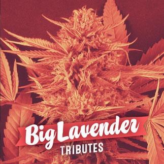big lavender semillas de marihuana del banco de semillas big seeds