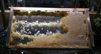 Zum Frühstück: Honig direkt aus der Wabe!