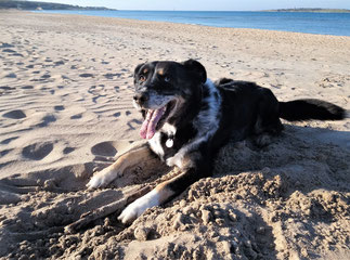 Yuma im Glück - Freiheit am Strand