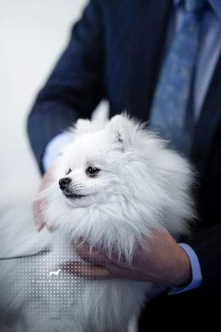 Dobby vom Pommerle an der Spitz Club Show 2019
