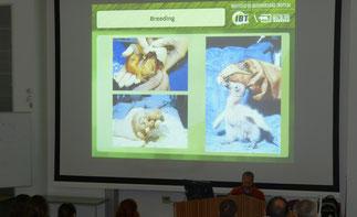 Andrés Capdevielle. Conférence à l'Université du Sussex (Royaume-Uni) sur le Condor des Andes (Sur la photo montrant des expériences avec le Condor de Californie)