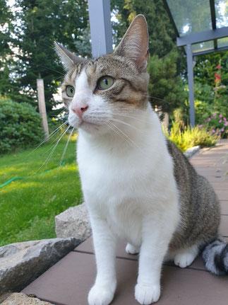 Katze Kasi trauert noch immer um ihre Freundin Hermine...