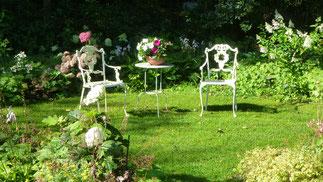 In der Morgensonne erstrahlen die Hortensien nach und nach am Waldesrand.