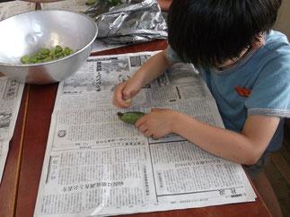 小さな手で、一生懸命そら豆をむく1年生