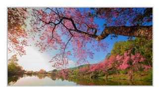 """Bildheizung """"Kirschblüte"""" 600 Watt, 110 x 60 cm, hier mit Silberrahmen, zum Vergrößern anklicken!"""