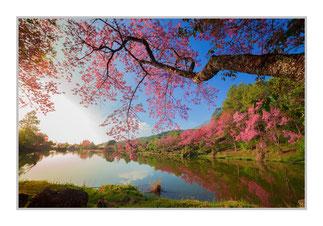 """Bildheizung """"Kirschblüte"""", 450 Watt, 90 x 60 cm, hier mit Silber-Rahmen, zum Vergrößern anklicken!"""