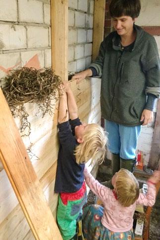 Innendämmung - Kinder stopfen Seegras