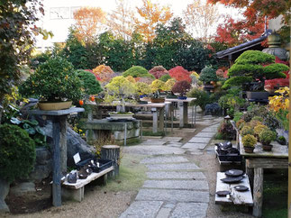 Bonsai Village in Omiya-ku, Saitama