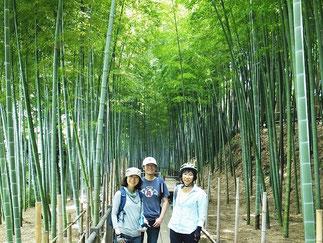 August: Bamboo Trees, Saitama, Saitama