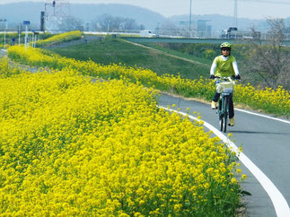 March: Rape Flower in Yoshimi, Saitama