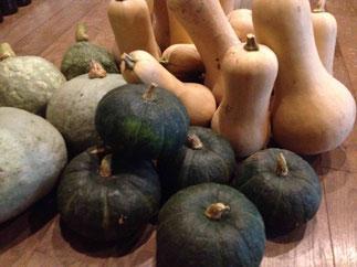 自家菜園のかぼちゃ