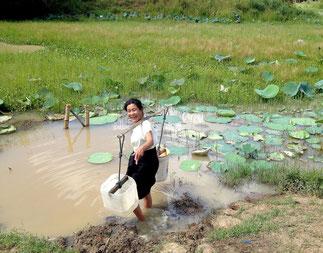 Villageoise puisant de l'eau insalubre dans une mare boueuse insalubre.