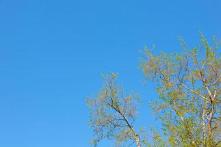 突き抜ける青空と木々