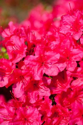 赤い花のイメージ2