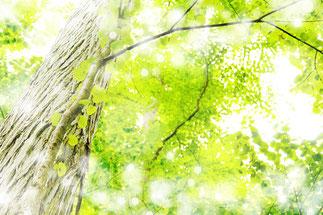 きらふわの新緑イメージ