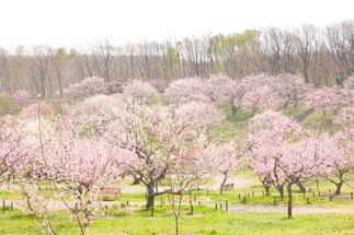 北海道 札幌 平岡公園