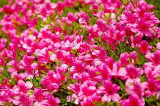 赤い花のイメージ