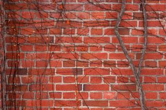 レンガ壁と枝