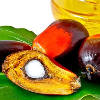 Palmöl macht unseren Planeten krank