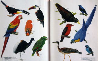 Oiseaux guyanais