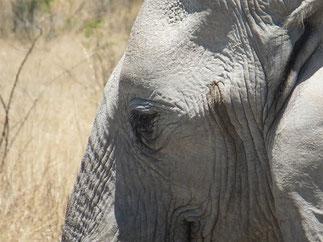 ゾウの目の深さとか