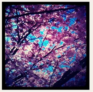 Printemps-Eté14/ Spring-Summer14
