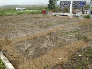 5月 ど根性ひまわり畑&プランター作り