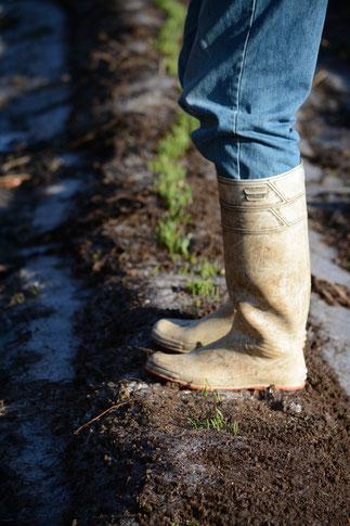 大分 農業体験 大麦 麦踏み