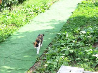 くだもの狩りの畑への入り口と農園の猫